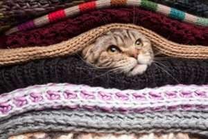 Warm cat